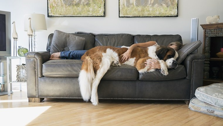 Couch Vs Sofa - Sofa Vs Couch This Is Couch Dogtime