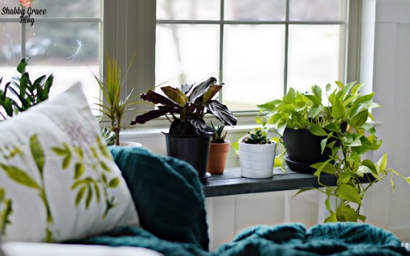 DIY Plant Stand Ideas for Indoor and Outdoor Decoration
