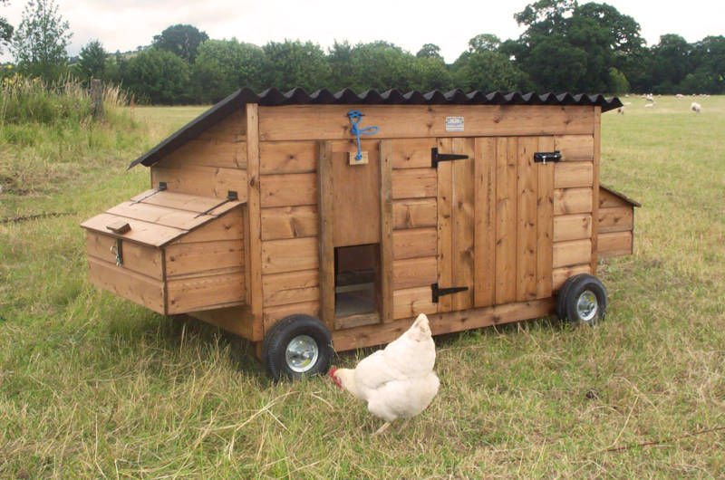 Chicken Roosting Ideas And How To Install Your Chicken Coop