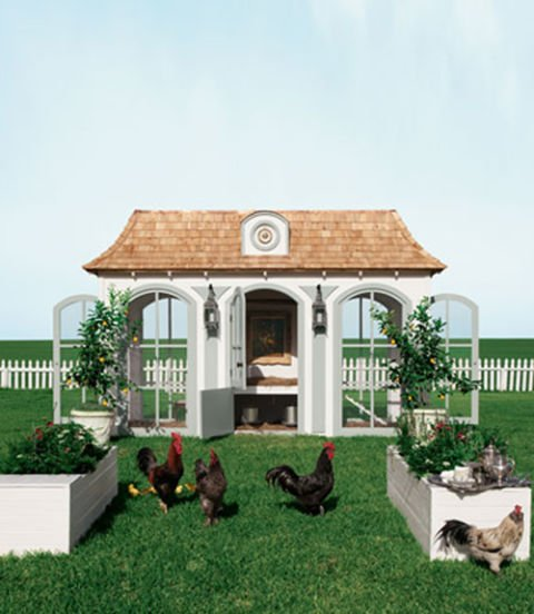 chicken roost dimensions