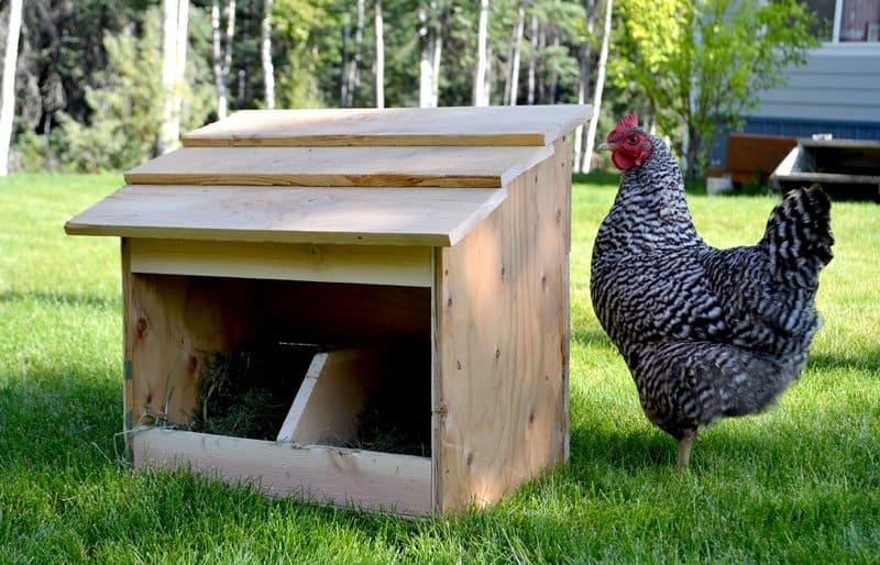 chicken roost height from floor