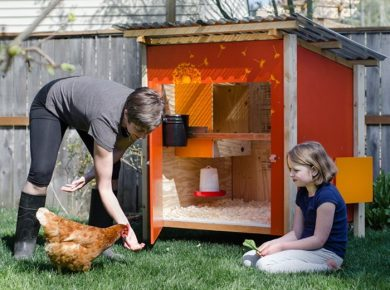 Chicken Roosting Ideas - Simple Chicken Coop Pin