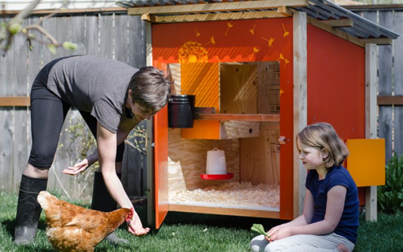 Chicken Roosting Ideas & How to Install A Chicken Coop