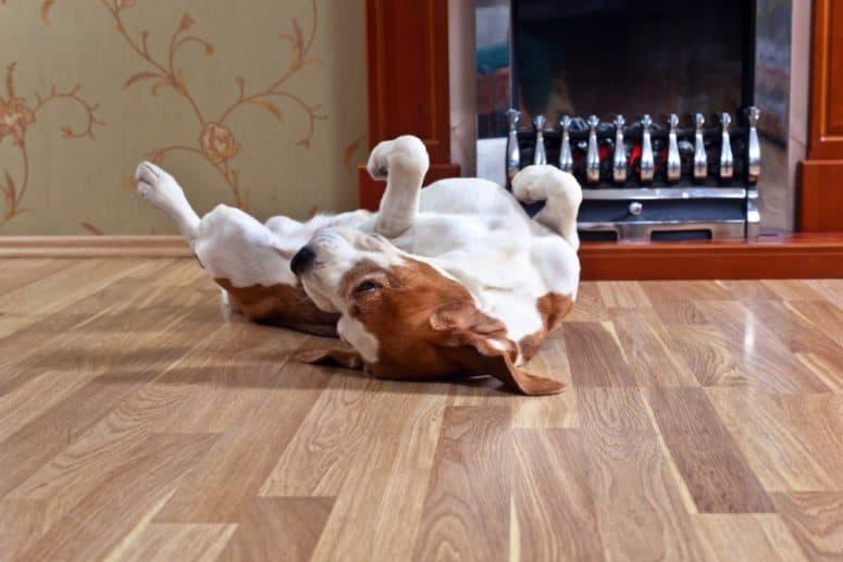 vinyl flooring for dogs