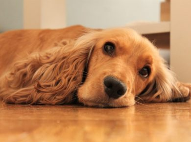 Best Flooring For Dogs - Best Flooring For Pets