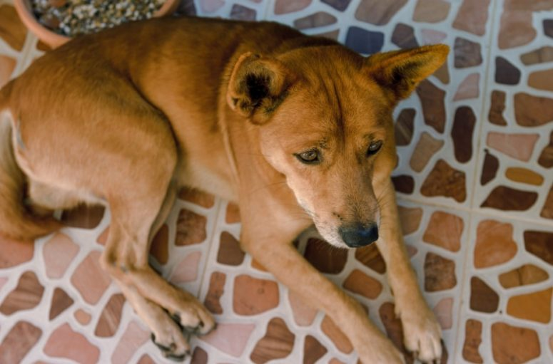 Ceramic Tile Flooring for Dogs
