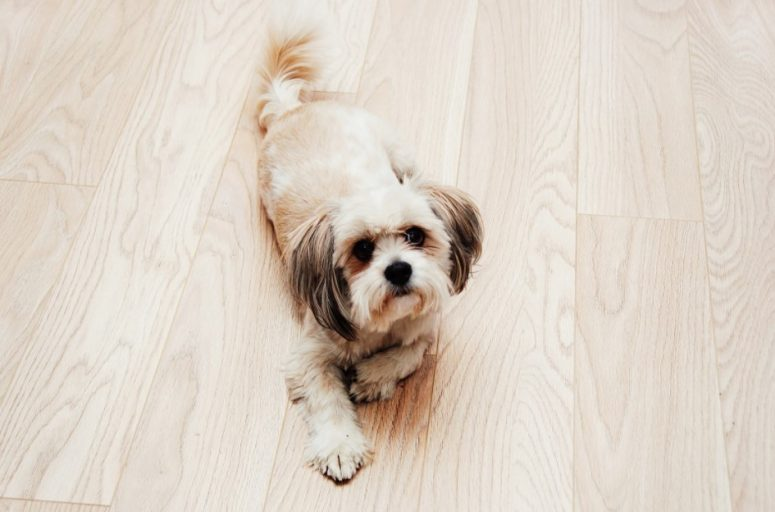 Engineered Wood Flooring for Dogs
