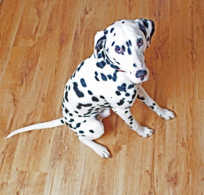 Laminate Flooring for Dogs