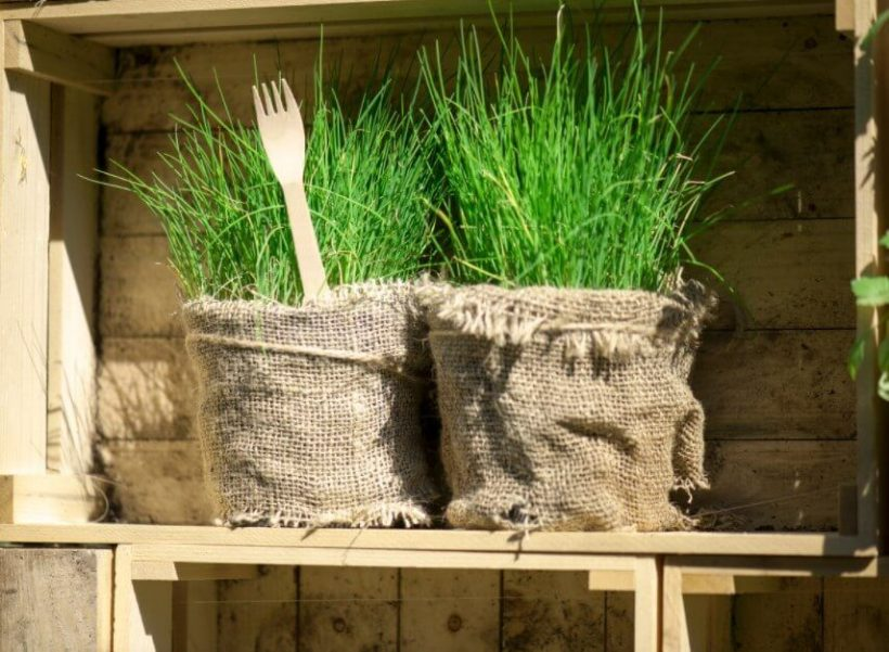How to Grow Chives Easily