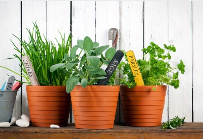 How to Grow Herbs Easily at Home