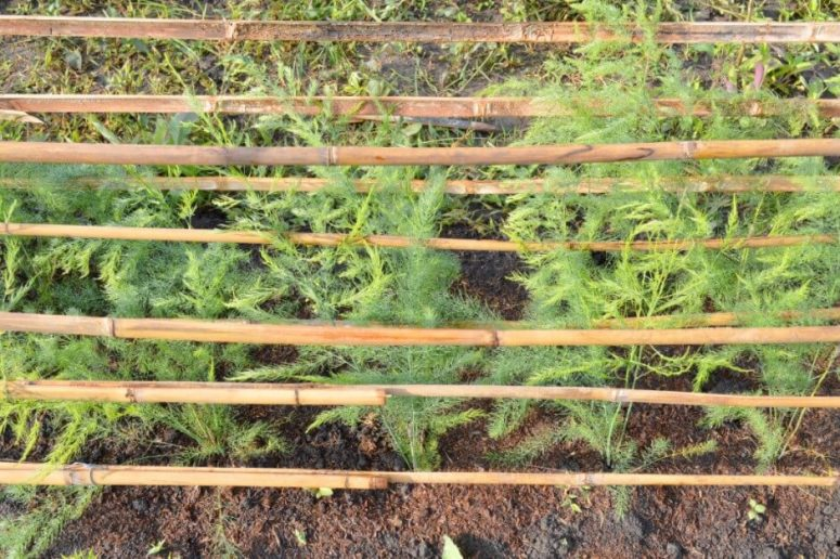 Besth methods to grow dill
